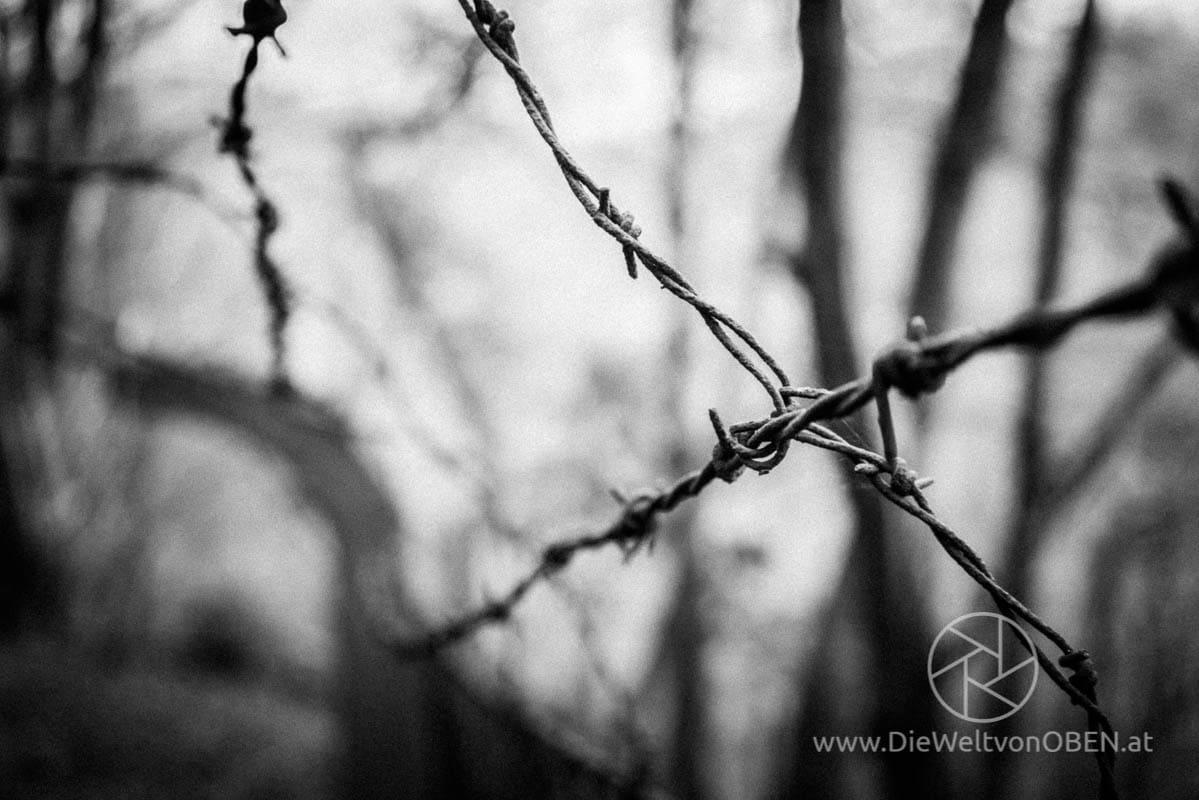 fotografie_gallerie_dwvo.at_DSC08771.jpg